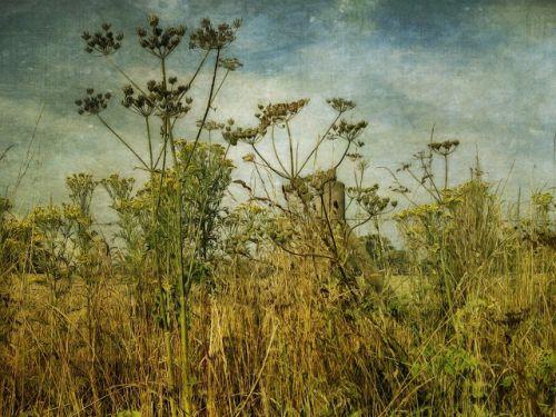 sarah jarrett,artiste peintre photographe,photos,illustrations,peintures,paysages,portraits de femmes